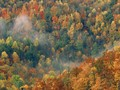 Colorful Autumn Forest, Great Smoky National Park, Tennessee