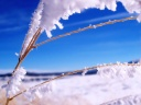 iWallpaper-Hiver-Collection (11)