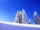 iWallpaper-Hiver-Collection (25)
