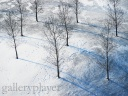 Snow-trees-arbre-wallpaper