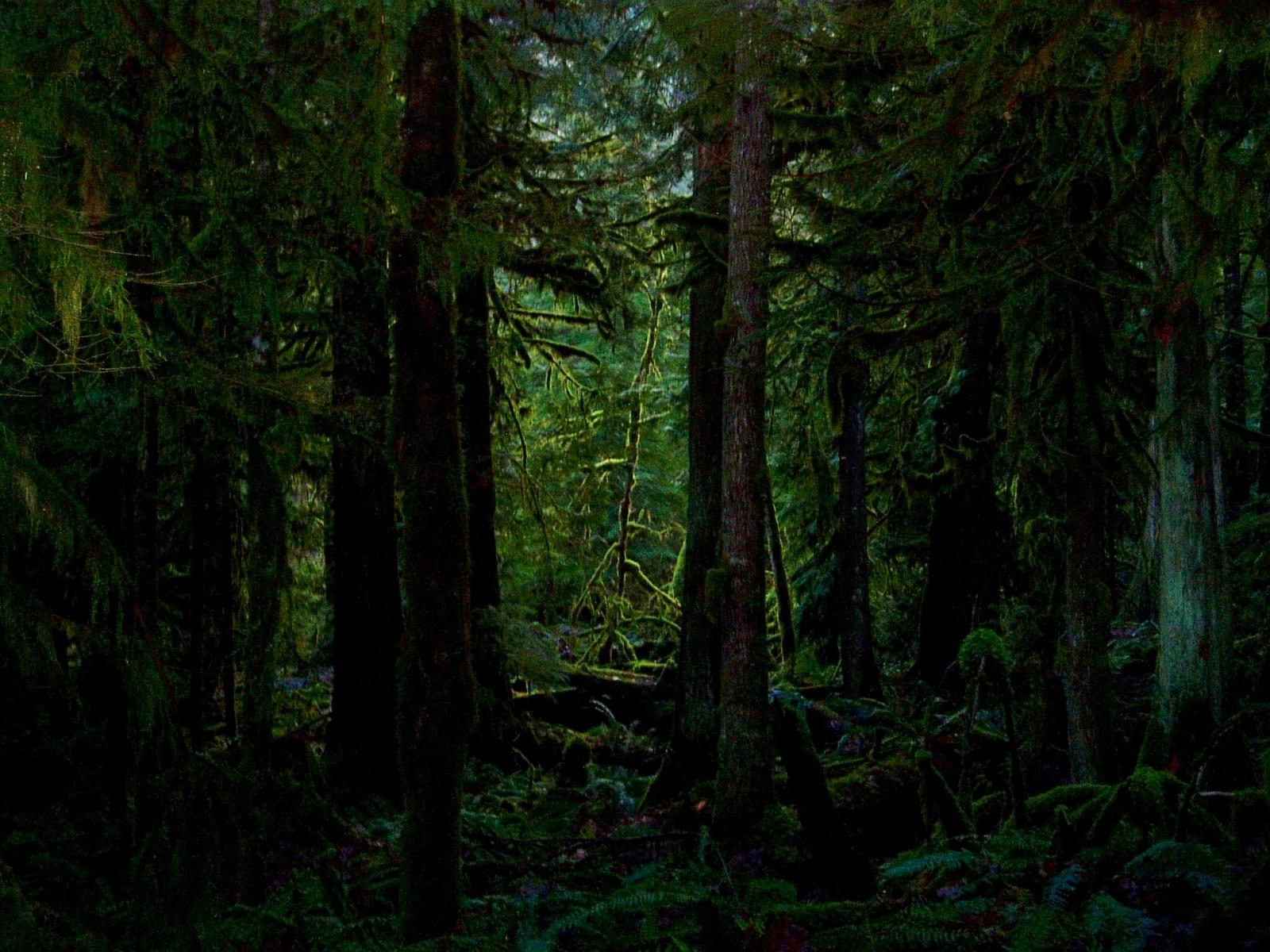 nature foret sombre - 10 000 Fonds d'écran HD gratuits et de qualité ! Wallpapers HD