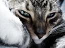 Fond d'écran chat