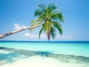 iWallpapers-Plage-tropicale (14)