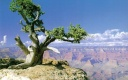 Nature Wallpapers-026-www.TheWallpapers.org-