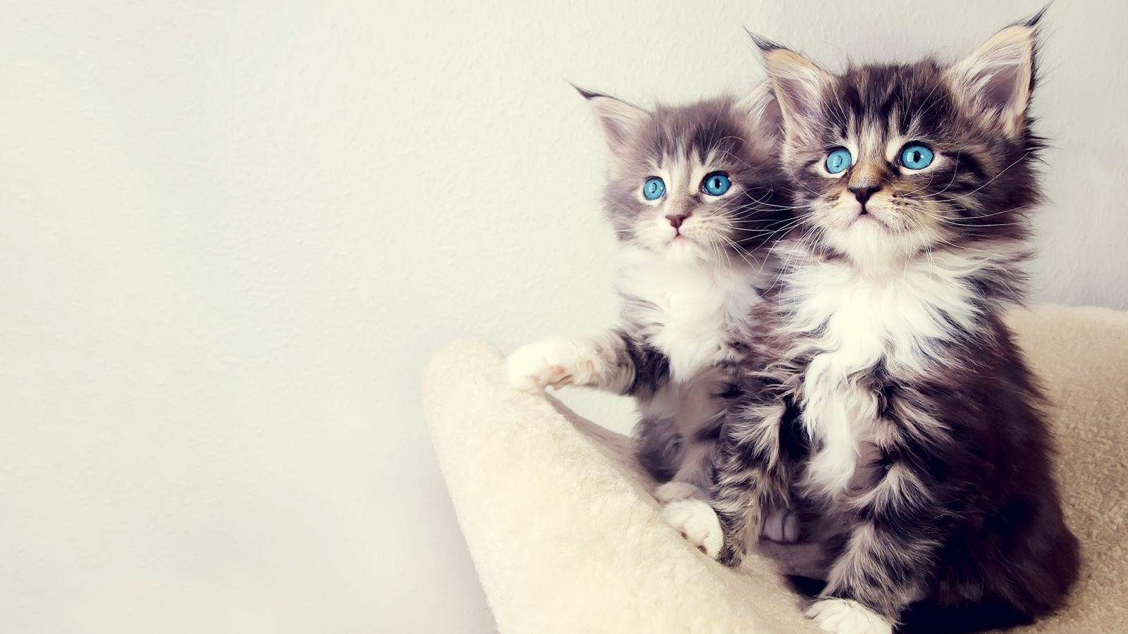 cute_kittens-wallpaper-1600x900.jpg