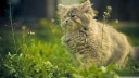cat eating grass-wallpaper-1600x900