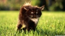 black fluffy kitty-wallpaper-1600x900