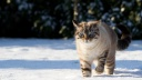 cat in the snow-wallpaper-1600x900