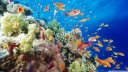 coral reef southern red sea near safaga egypt-wallpaper-1600x900