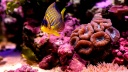 reef fish-wallpaper-1600x900