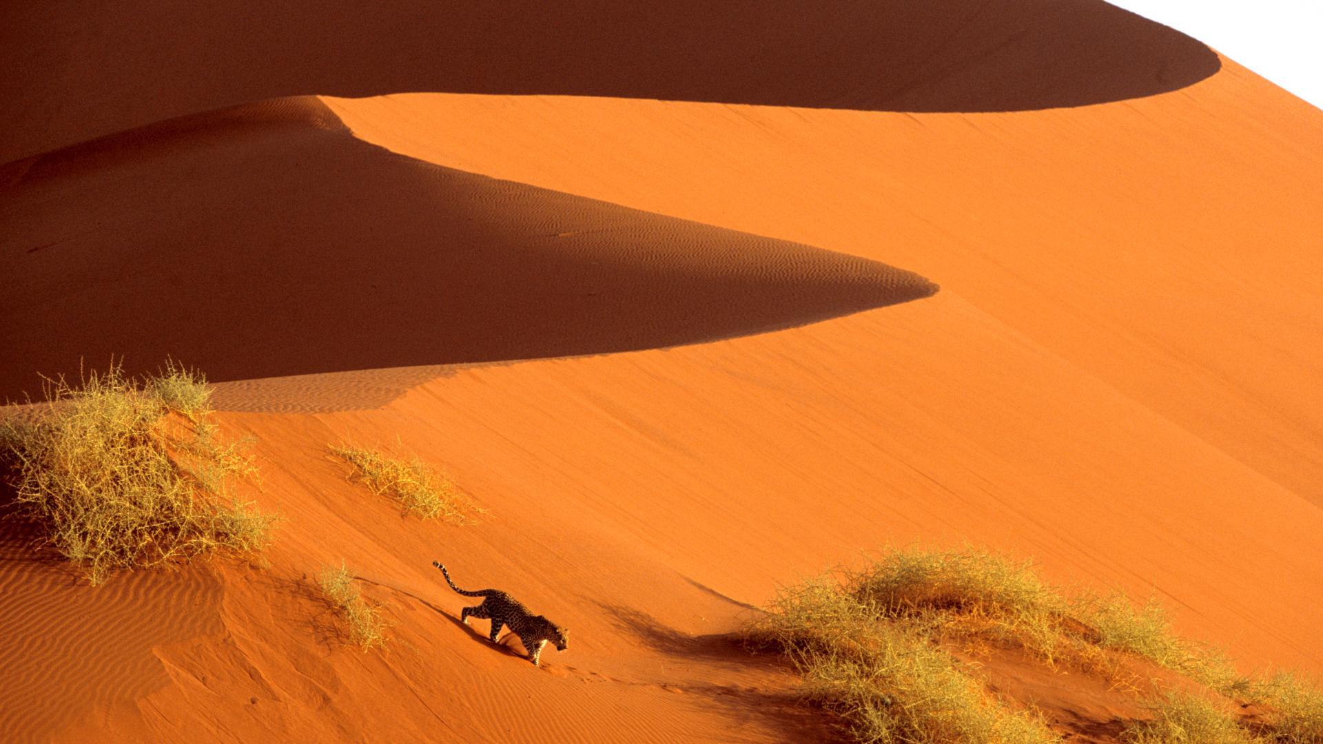Randonnée le long dune des dunes de sable Namib Sossusvlei Namibie