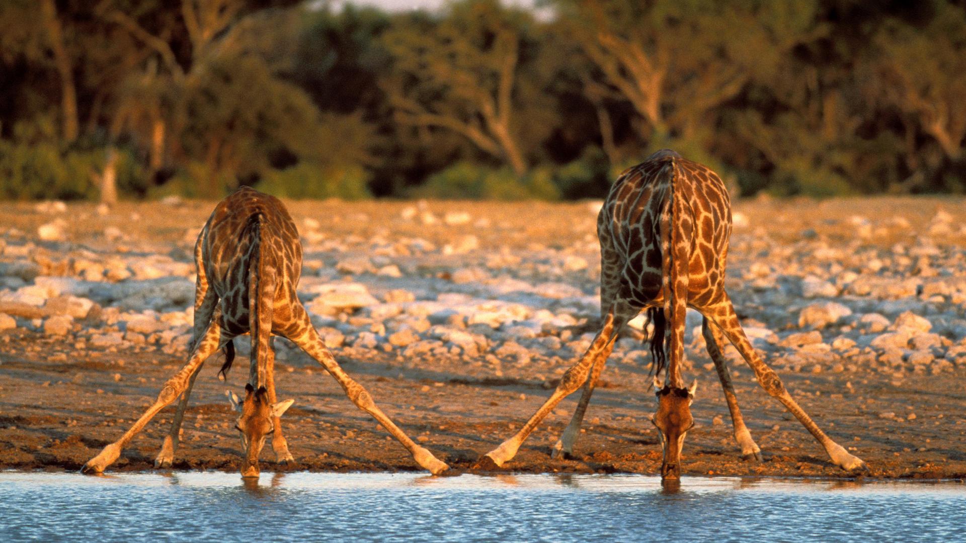Який африканський секс 22 фотография