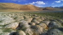 Tussocks of Permafrost, Ladakh, India