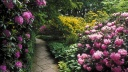 Rhododendrons, Berggarten, Hannover, Germany