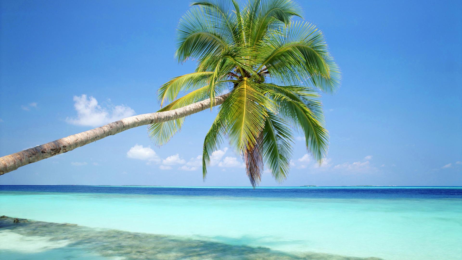 Ile Tropicale Aux Maldives 10 000 Fonds D Ecran Hd Gratuits Et De Qualite Wallpapers Hd