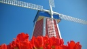 Windmill and Tulips, Woodburn, Oregon
