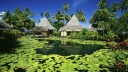 Lily Pads and Thatched Huts, Tahiti, French Polynesia