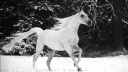 white horse running in snow-wallpaper-1920x1080
