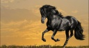 black horse running-wallpaper-1920x1080