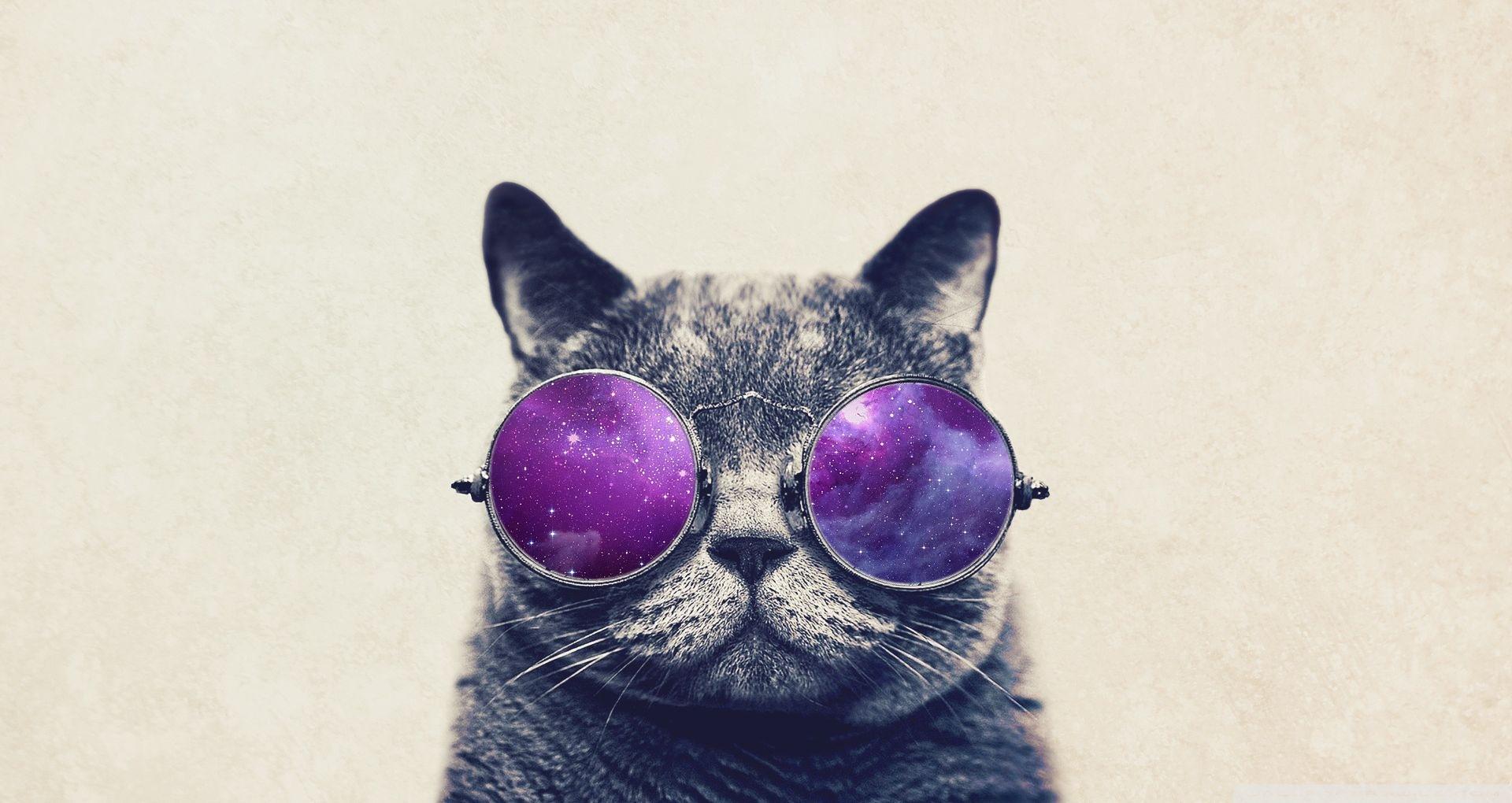 Lunette Soleil Cat