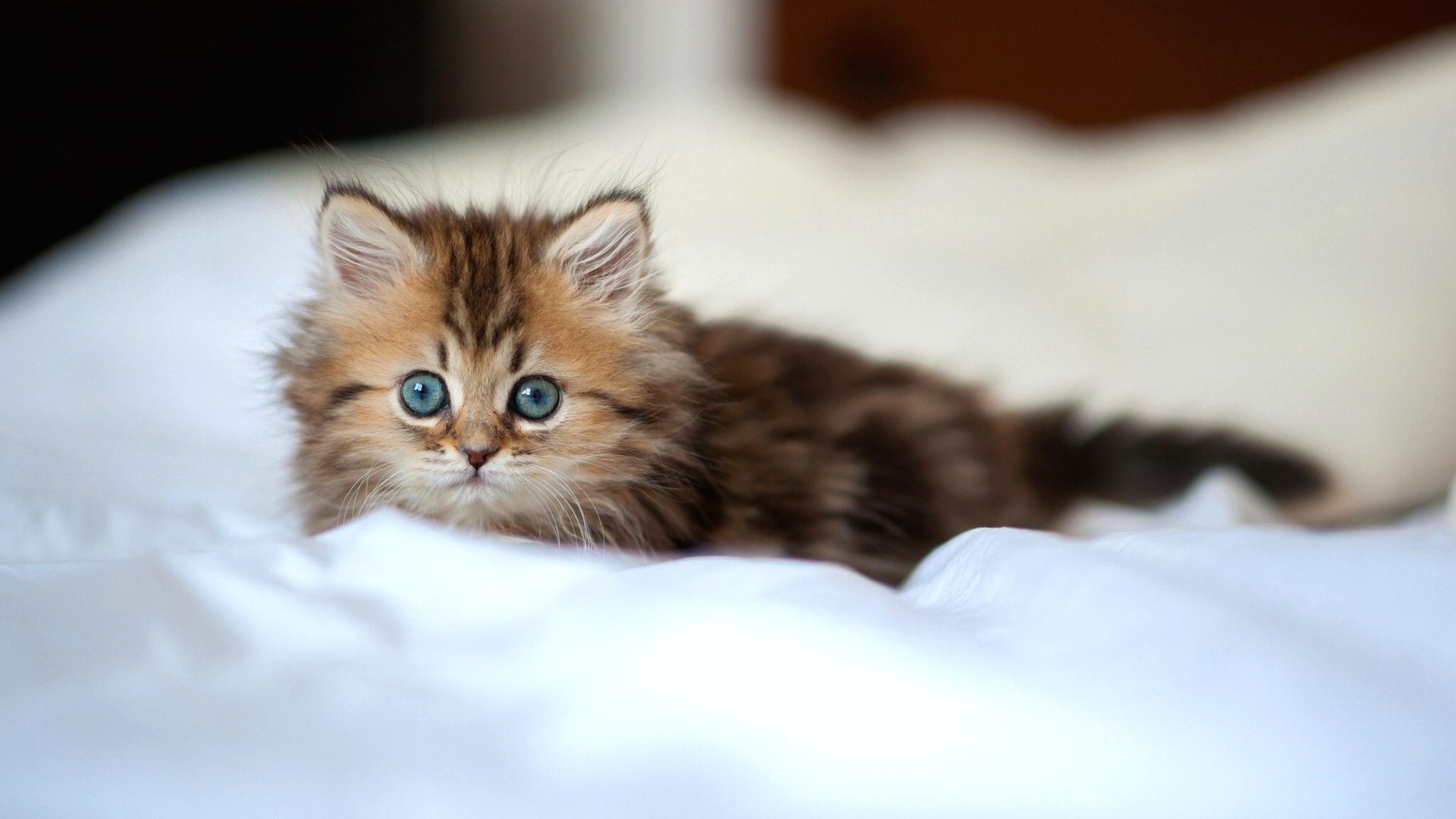 Petit chaton mignon 10 000 fonds d 39 cran hd gratuits et de qualit wallpapers hd - Image de petit chat ...