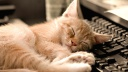 Chat endormi sur le clavier