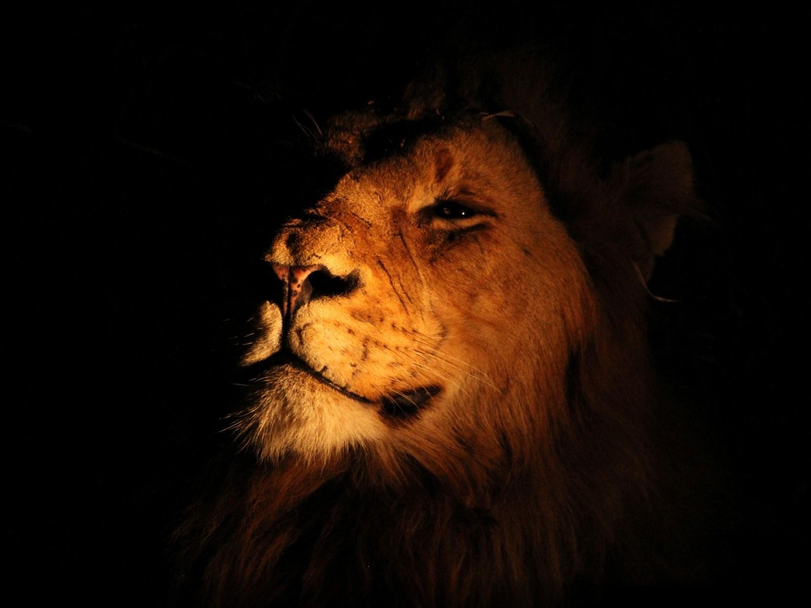 Fabuleux Le roi lion - Wallpaper - 10 000 Fonds d'écran HD gratuits et de  FL57