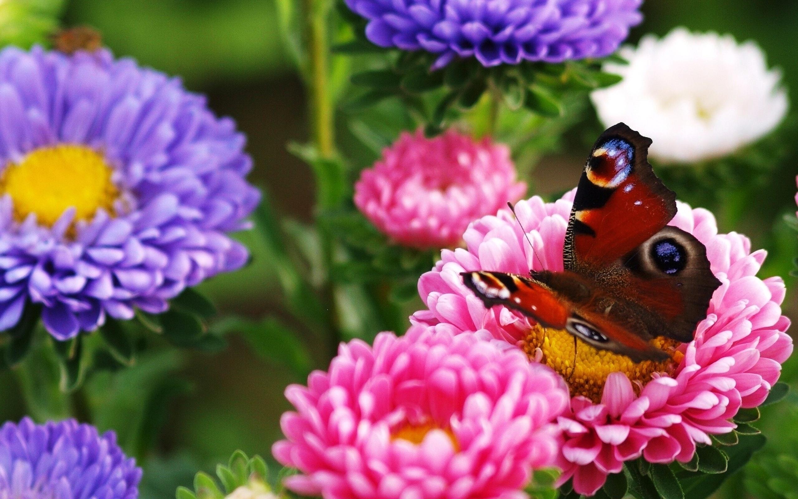 papillon dans des fleurs 10 000 fonds d 39 cran hd gratuits et de qualit wallpapers hd. Black Bedroom Furniture Sets. Home Design Ideas