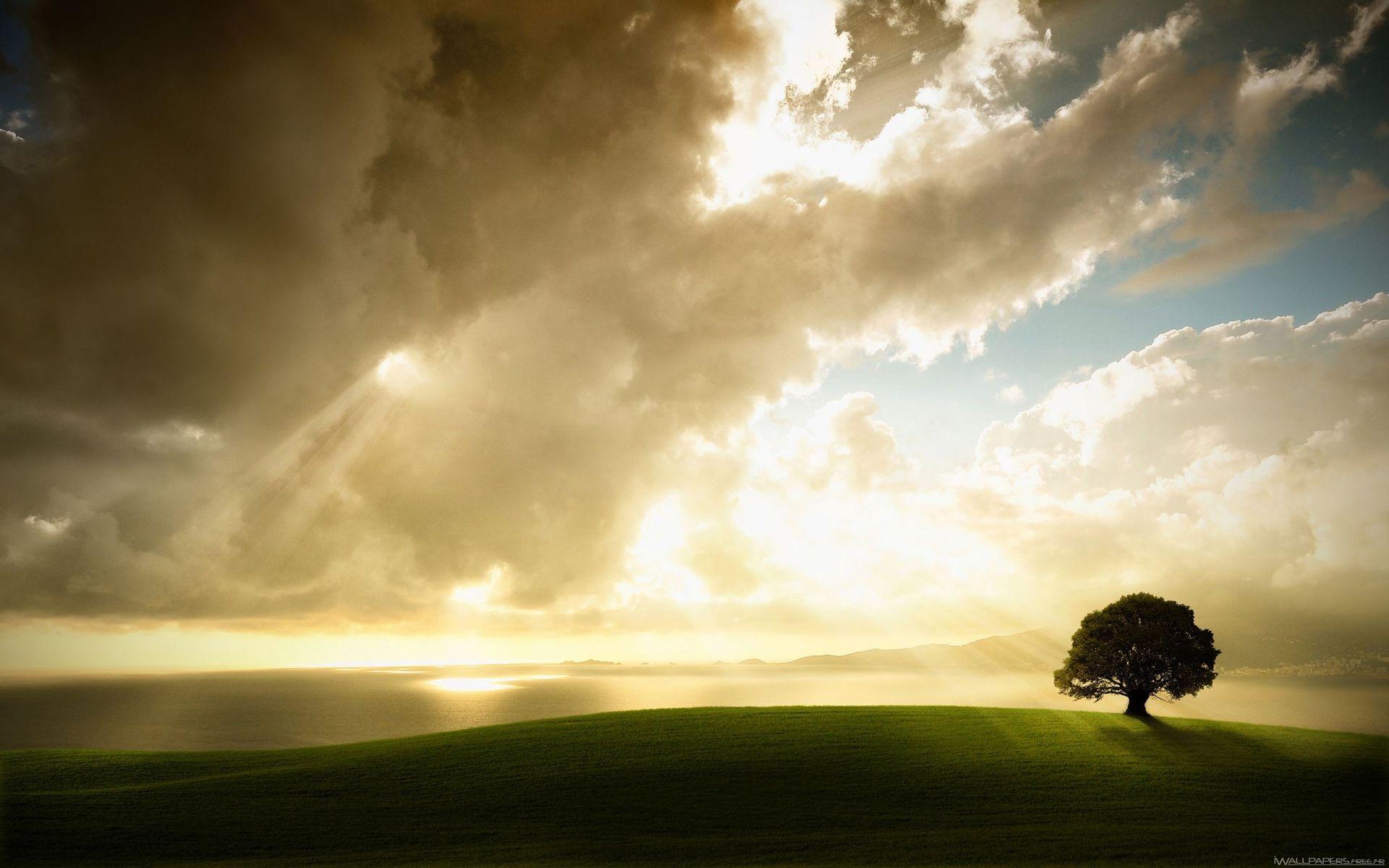 Magnifique fond cran arbre 10 000 fonds d 39 cran hd for Magnifique fond ecran