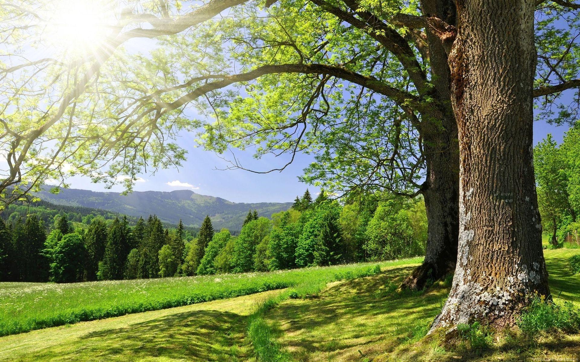 fond d'ecran gratuit nature