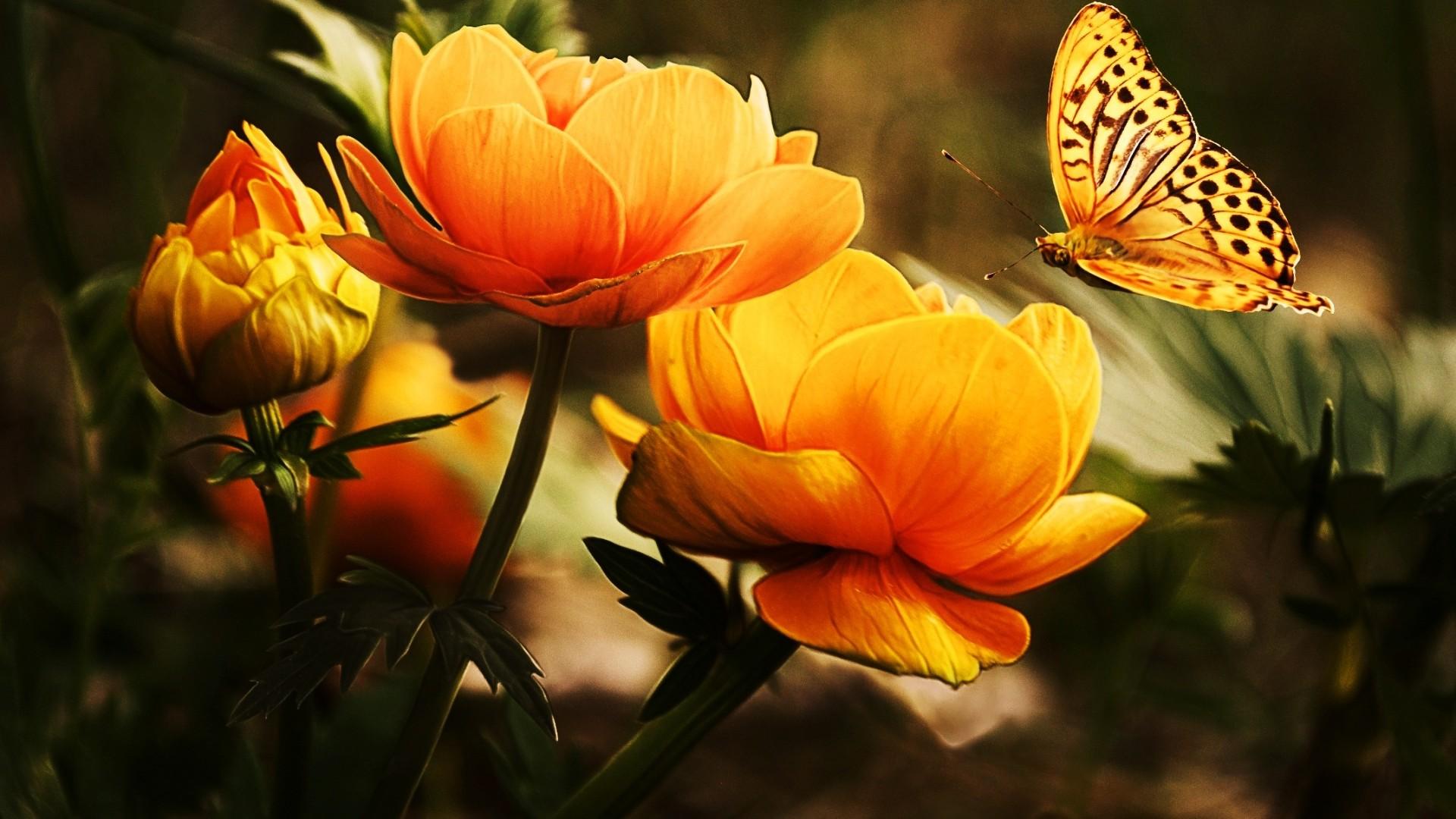 Fleur et papillon 10 000 fonds d 39 cran hd gratuits et de - Image papillon et fleur ...